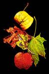 Gatehouse: Autumn Collection 2 by Coigach