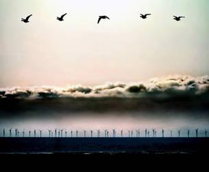 Caerlaverock Geese1 by Coigach