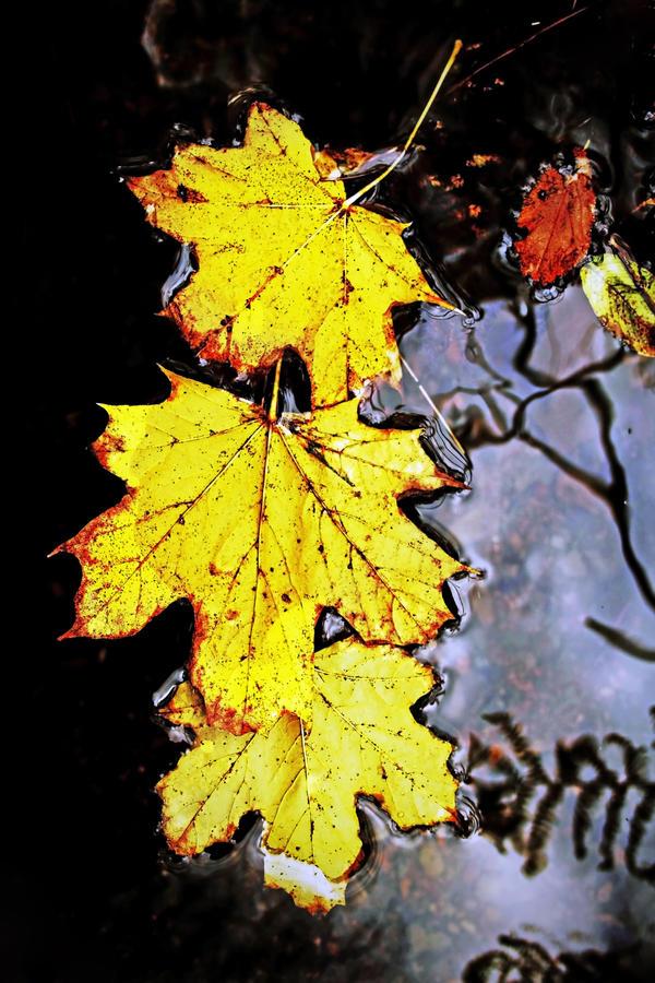 Autumn Lade 3 by Coigach
