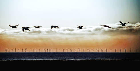 Caerlaverock Geese2 by Coigach