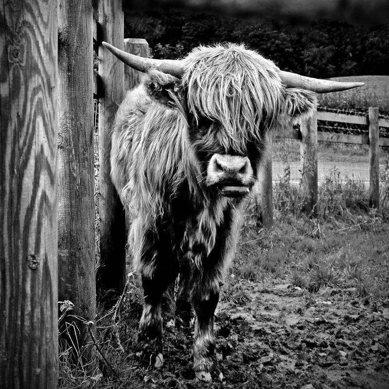 Monochrome Highlander by Coigach