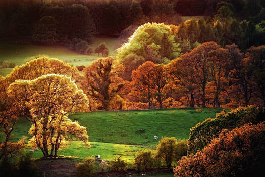 Fleet Valley: Autumn Fire