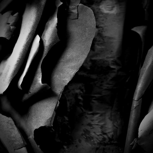 Eucalyptus Monochrome by Coigach