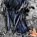 Crow+Leaf: Wanlockhead by Coigach