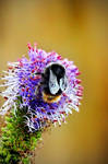 Bee+Bloom by Coigach