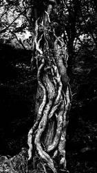 Monochrome Treeknot by Coigach