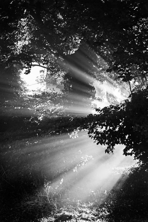 Dawn+Mist 4 by Coigach