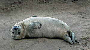 Seal Appeal: meditation3 by Coigach