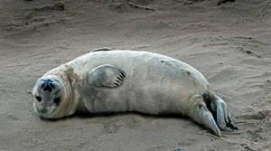 Seal Appeal: meditation3