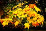 Norfolk Autumn 2 by Coigach