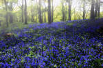 Bluebell Glow Reprise