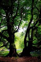Giants - Castramon Wood, Scotland by Coigach