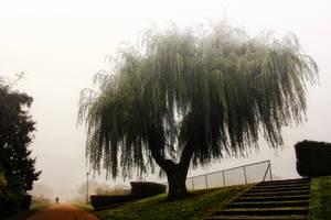 Autumn Park 2 by Coigach