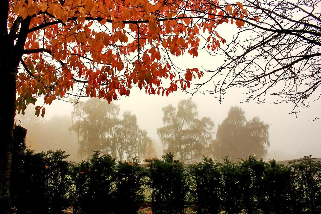 Autumn Park 4 by Coigach