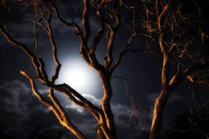 Norfolk Moonlight Reprise by Coigach