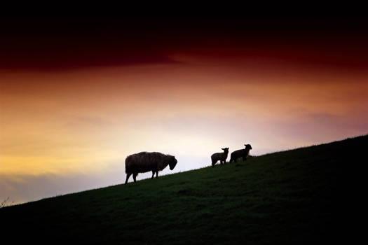 Cumbrian Spring: Sunset Pasture