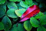 Leaf+Feather by Coigach