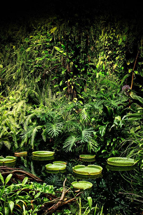 Eden Rainforest: Lily Pond by Coigach