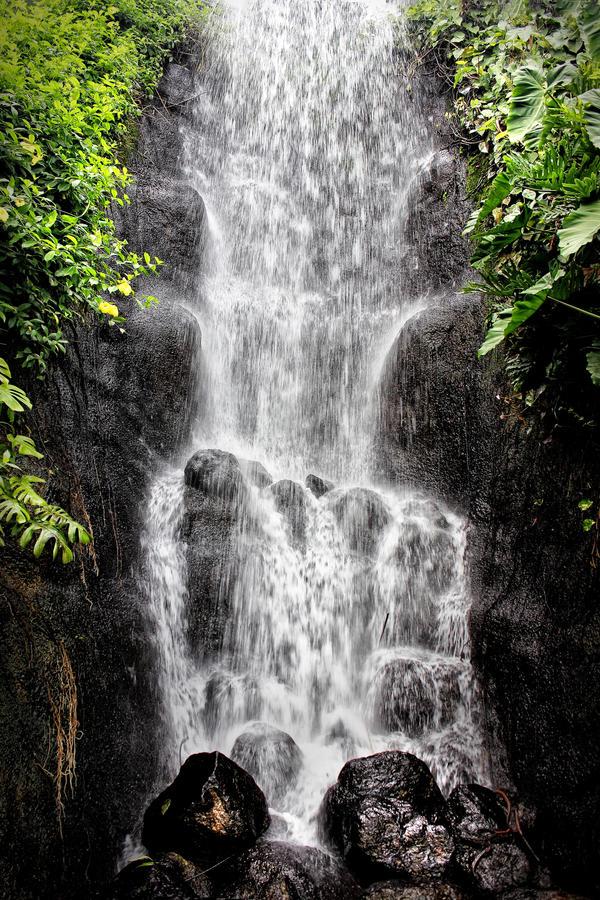 Eden Rainforest: Waterfall by Coigach