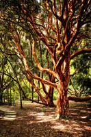 Cornish Trees 4 by Coigach