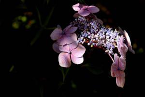 Summer Colours by Coigach