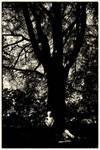 British Gothic 3: Small Boy, Big Tree by Coigach