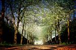 Spring Park by Coigach