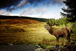 Galloway Stag 1 by Coigach
