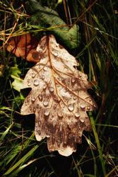 Cumbrian Autumn by Coigach