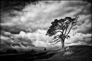 Scots Pine + Scottish Sky by Coigach