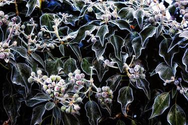 Dawn Frost 3 by Coigach