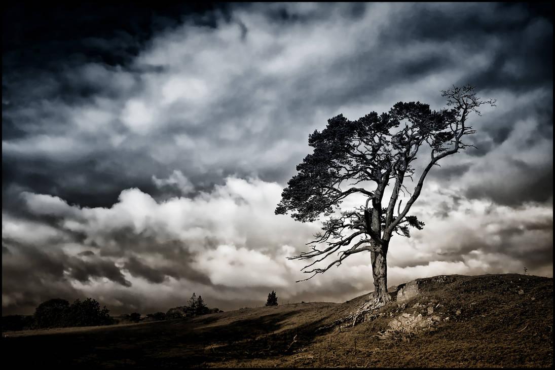 Scots Pine + Scottish Sky: Bi-colour Reprise by Coigach