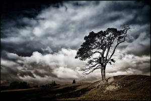 Scots Pine + Scottish Sky: Bi-colour Reprise by Coigach