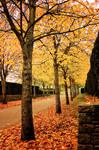 Waterloo Park: Autumn Trees 2