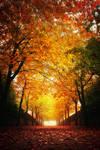 Waterloo Park: Autumn Trees 3