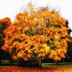 Autumn Memory 2