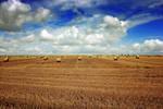 Harvest Plain
