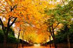 Autumn: Colour Flood 3