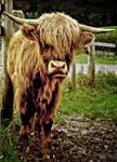 Highland Smile by Coigach