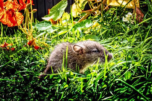 Norfolk Garden Visitor