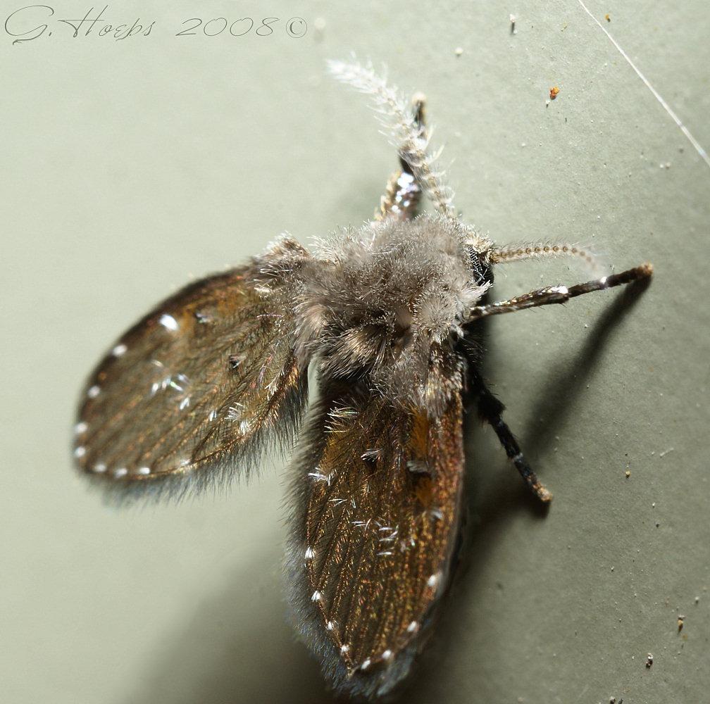 Bathroom Fly by webcruiser Bathroom Fly by webcruiser. Bathroom Fly by webcruiser on DeviantArt