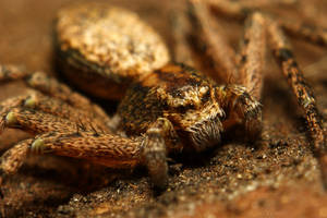 Crabspider under the bark by webcruiser