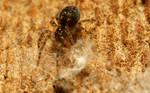 Little spider under the bark