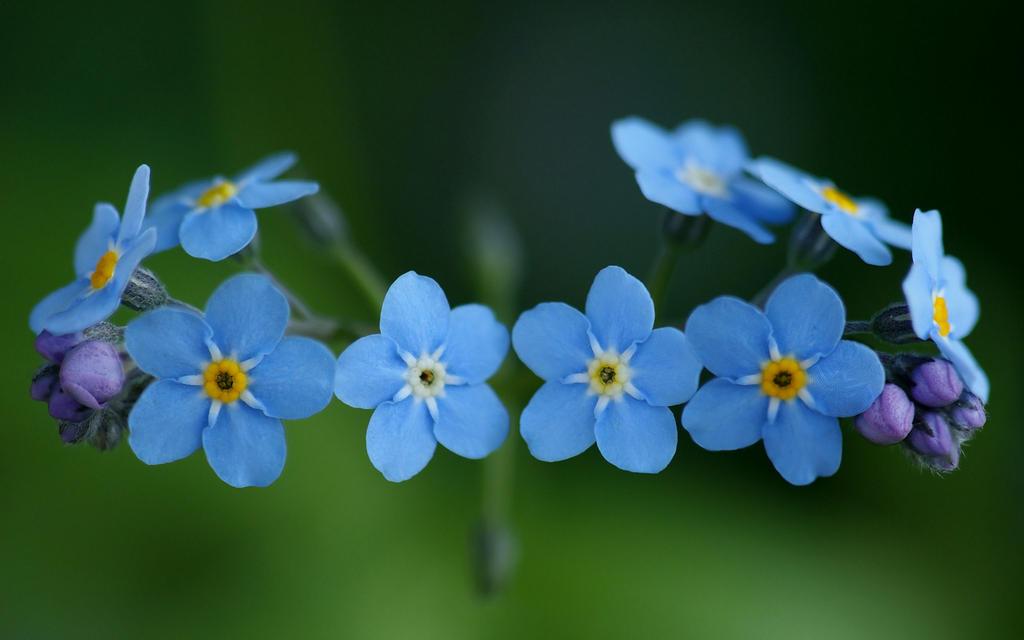 Floral Diadem by webcruiser