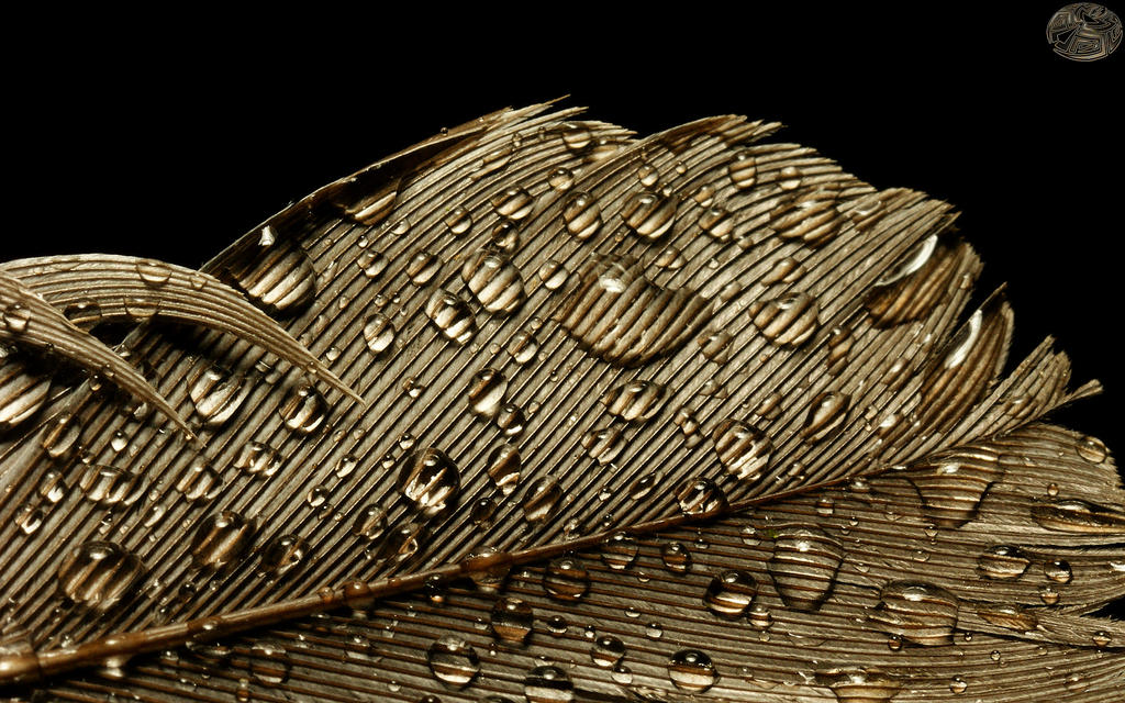 Raindrops on a Feather III