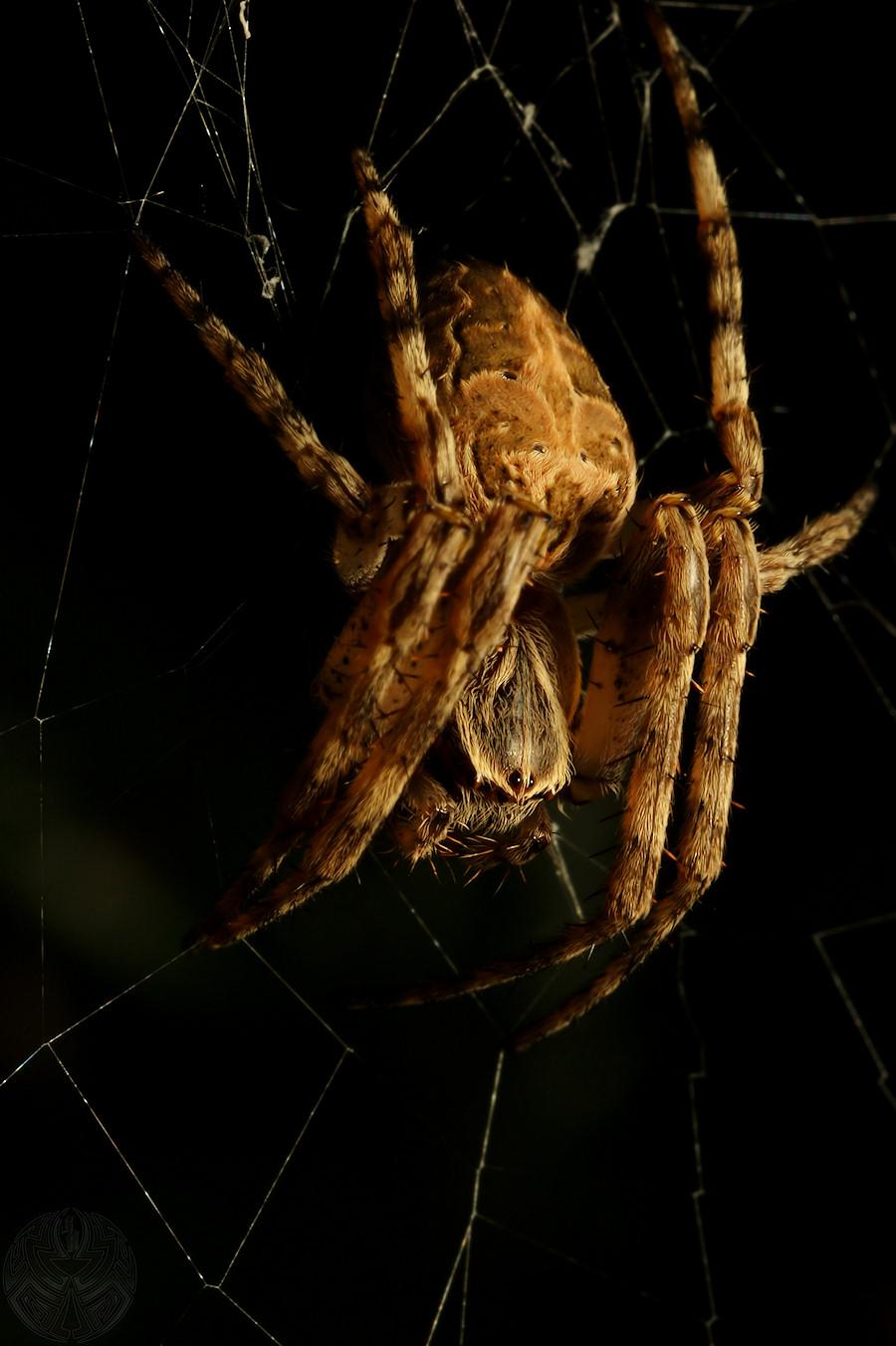 Needless Arachnophobia 01