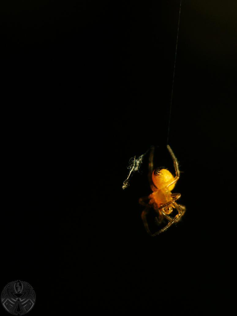 Itsi Bitsi Spiderling by webcruiser