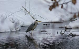 Grey Heron IV by webcruiser