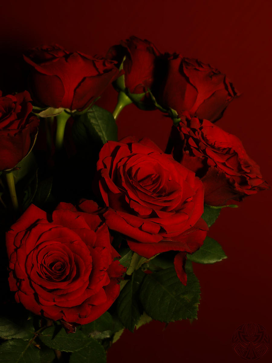 dark red roses by webcruiser on DeviantArtRed Roses Tumblr Photography