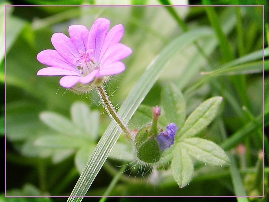 little pink flower wish III by webcruiser on deviantART